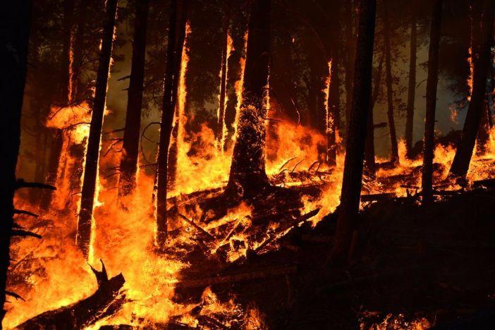 Kod Metkovića izbio veliki požar (VIDEO)