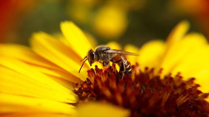 neonikotinoide koji dokazano štete pčelama
